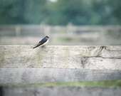 Country Bird Photograph swallow fence wood green blue western summer woodland rustic - FirstLightPhoto