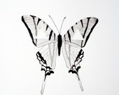 Watercolor Butterfly - Original - Black - White - Gray - Geometric - Triangle - GeometricInk
