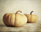 Autumn Pumpkin Photograph fall white mini harvest still life cream Thanksgiving ghost pumpkins - FirstLightPhoto