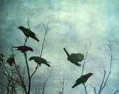 Fighting Flying Crows 6 x 6, Bird Silhouette in a Cloudy Moody Blue Green Sky. Signed Photo Artwork ready to frame. - CatinoCreations