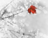 Autumn Leaf Photo Silver White and Red--Fine Art Nature Photography 8x10