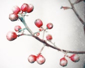 Red Winter Berries Fine Art Photography-  Snow, Nature, Flower, Dreamy Wall Decor - HoneySparrow