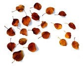 Autumn Leaf Palette No. 1 - 8x10 Photo - Minimal Rustic Modern Decor