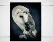 "Barn Owl Photo - 8x10 Photograph - Owl Art Print - Owl Photograph - dreamy fairy tale midnight blue woodland fall autumn 'It's Only Forever"" - BokehEverAfter"