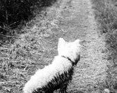 I am Crumpet 11 - Dog Photography - Westie - West Highland terrier - Wall Décor - 7x5 Print - shortwork