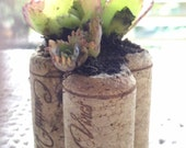 Wine Cork  Trio Succulent Planters / weddings, parties, gifts/mini garden - PattiesPassion