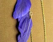 Purple feathered earlace