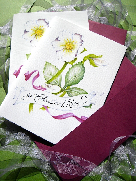 Christmas Rose, Elegant Christmas Cards Set, Botanical Art Card, Christmas Flowers - Box of 10 Cards