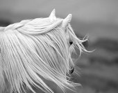 Black and white horse photo, fine art photography print, white pony, animal photography, 36 x 24