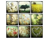 Title: set of 9 4x4 prints - yellow - floral - tree, daisy, pink flowers, heart of stone, reaching up - jackiecooper