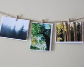 Woodland Landscape - Set of 3 Blank Cards - Tree Scenes -Thank You Cards - Foggy, Fall Leaves, Green Trees - Arbor Day - Forest