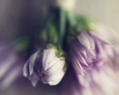 Spring purple floral print- romantic,  shabby chic, enchanting, french country,  for her, fine art photo, 8x10 print - dullbluelight