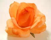 "Rose Hair Clip, ""REAL TOUCH"" Rose in Light Orange, for Wedding, Flower Girl, Bride, Bridesmaid, Prom, May Day, or for Lapel, Hat, Shoes"