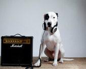 Detroit pit bull, fine art print, dog photography, muted, Marshall speakers, white black, kid's room - lisacervone