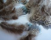 GOLDEN PHEASANT FEATHER Loose , Earthy Tones, Natural, Not Dyed  / 750 - D - KIMONOSFeathers