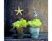 Nautical Thimble Planters Set of 2 Vintage Curiosities - Miniature Starfish and Seashells - DoodleBirdie