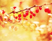 Spring Photography, 8x10, forest fruits, red fruits, red spots, bokeh, nature photograph, yellow, orange - magnesina
