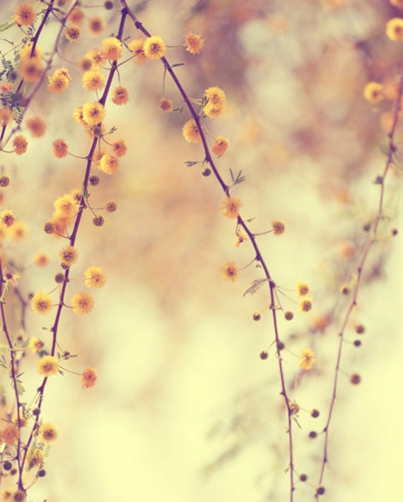 Yellow spring tree print- pastel, floral, blooms, enchanting, branches, woodland, nature, fine art photography, 8x10 print