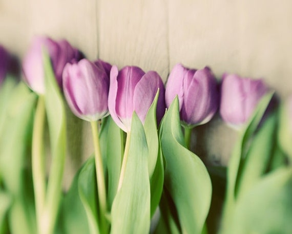 Tulips spring floral print- purple, romantic, shabby chic, enchanting, french country, dreamy, fine art photo, 8x10 print