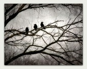 "Crow Canvas Gallery Wrap 11"" X 14"" Black Crows, 3 Crows, Mysterious Crow Art"