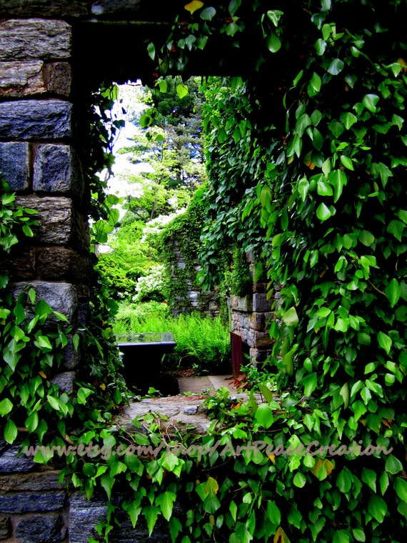 Garden Window - 8x10 - stone window - trailing vines - original nature photography