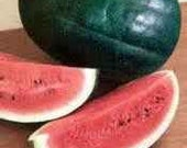 10 Black Diamond Heirloom Watermelon Seeds - ThymeSquareHerbFarm
