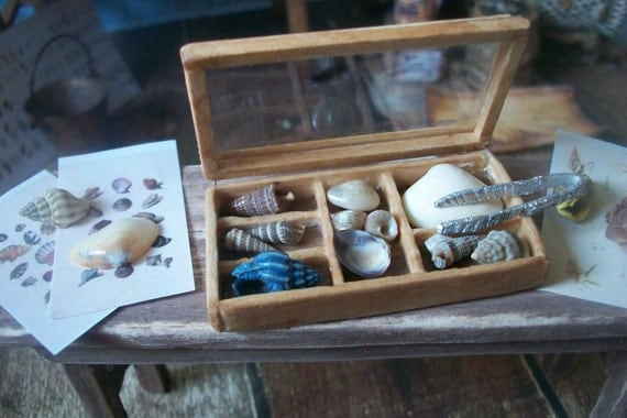 Miniature Lidded Shell Specimen Case