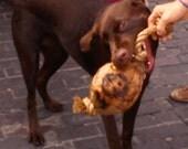 Mutznut Natural Dog Toy & Treat