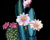 Glicee print- Cactus and  flower illustration - artandpeople