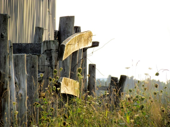 sun shining on a meadow grassland with old barnwood fence photo
