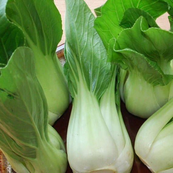 bok choy pak choi non heading chinese cabbage organic. Black Bedroom Furniture Sets. Home Design Ideas