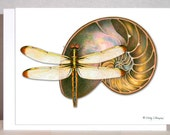 Dragonfly art, Nautilus fossil blank note card - Original design - wthompsonart
