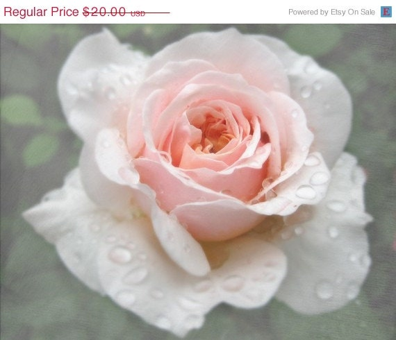 50% OFF CIJ SALE A Rose After the Rain Digital Photograph