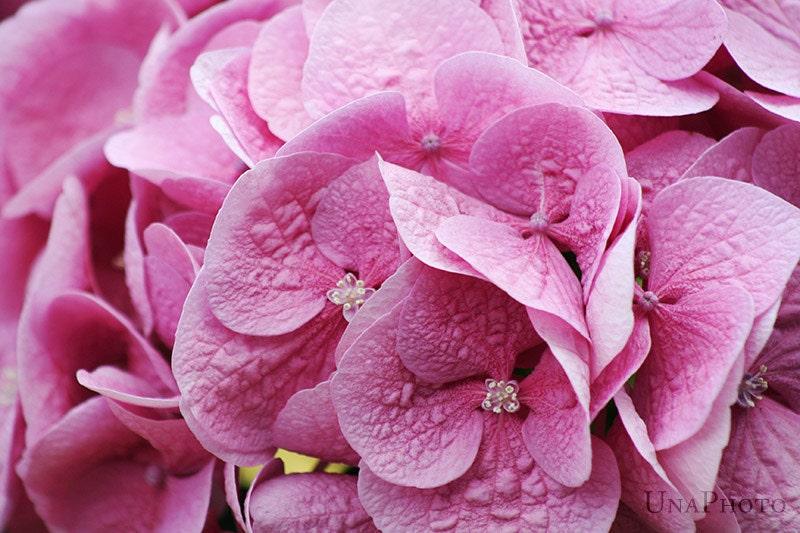 Pink - 8x10 Fine Art Photograph