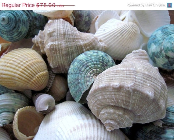 ON SALE Summer Seashells Photo, 20 x 16 inch,  Fine Art Poster Print