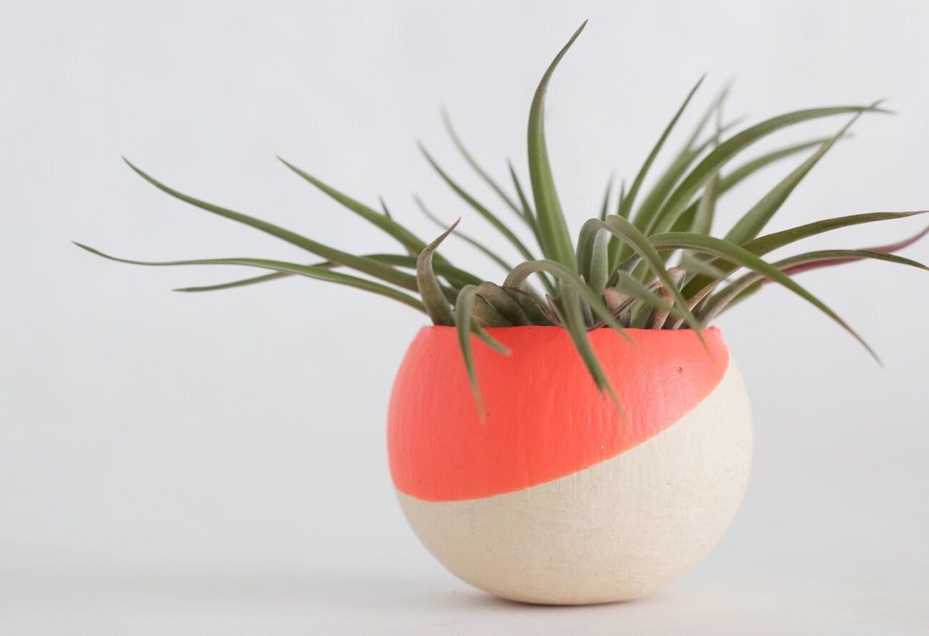 Melon Hand Dipped Pod (No Plant) - BirdAndFeatherCo