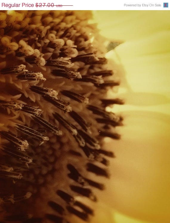 Sale Photo sunflower in yellow, brown, cream, petals autumn fall home decor 8x10 - RiskLoveFreedom