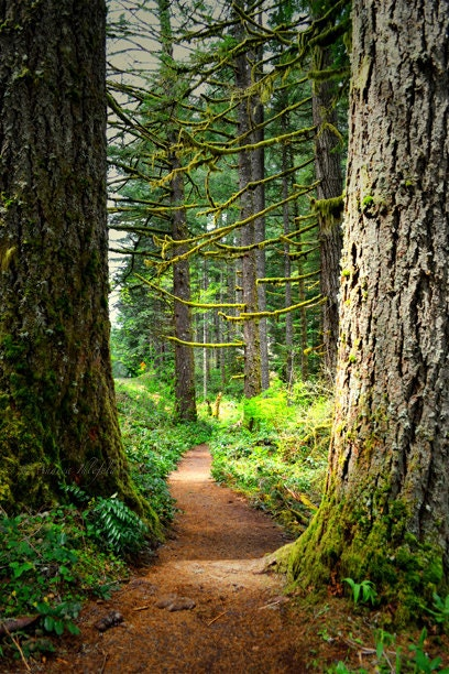 Oregon Woodland Photography Print 11x14 Enchanted Forest Ecola State Park Spring Landscape Photography Print. - WildWildernessPhotos