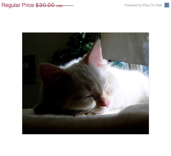 White Ragdoll Kitten, Honey, Napping, Fine Art Photograph, 10 x 8, Nursery Room Art, Soft Dreamy Photo, Cat Lovers Dream