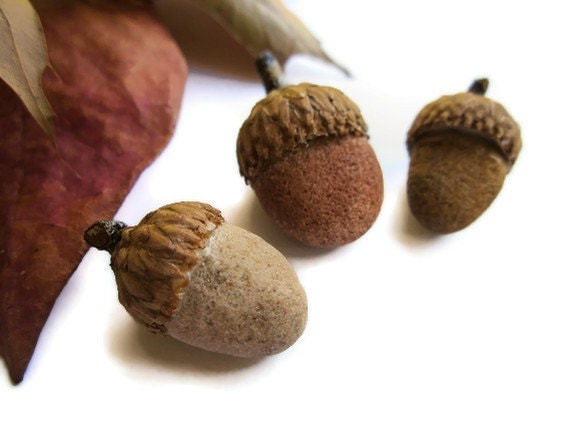 Stoned Acorns - Lake Superior Sand Stones with Real Acorn Caps Home Decor
