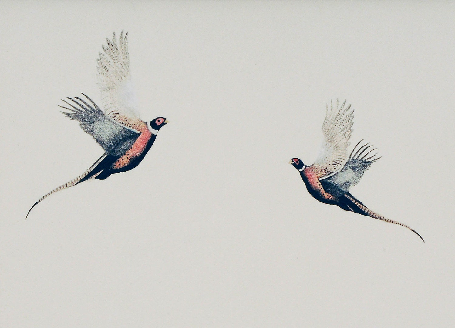 Valentines Bird Art Pheasants Flying, limited edition print of original - romantic, valentines, illustration, wedding gift - StudioLavaan