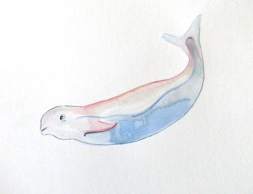 Beluga - Orignal Watercolor - MrPaint