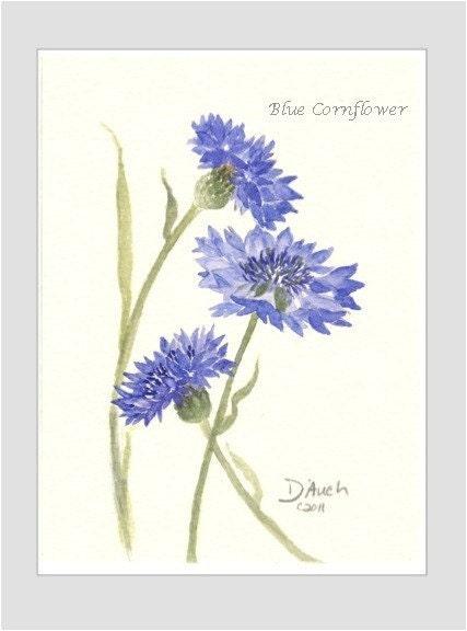 Blue Cornflower art print - Original Watercolor Painting by Jamie Dauch Michigan artist - Cottage decor - Home and Garden - flower - JKDAUCH