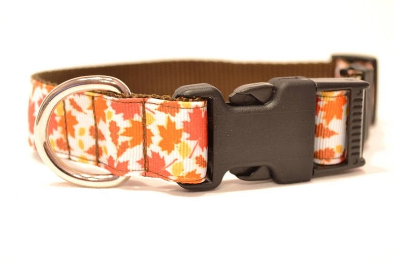Fall Leaves Dog Collar - WillyWoofs