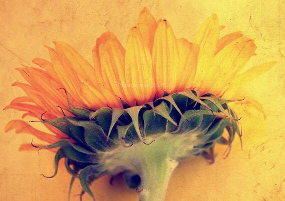 8X10 or A4. Sunflower photography. Home decor. - filamentoTGS