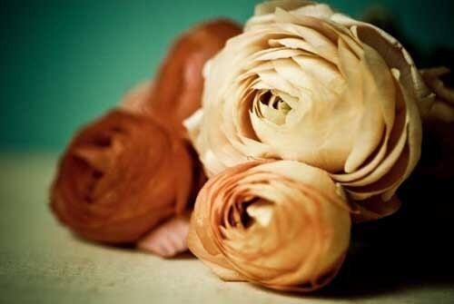 Старинные розы.  цветок фотографии.  романтический декор дома.  аква потертый шик дома.  французский декор стране.  готовые рамы.  8x10 стены искусства