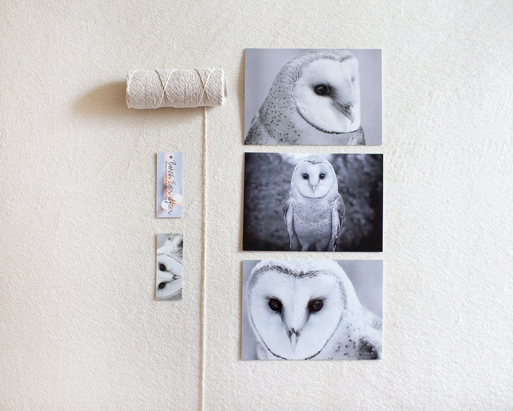READY TO SHIP - Owl Postcard Set - 3 piece 4x6 framable black and white owl woodland nature cute animal bird minimal modern art prints - BokehEverAfter