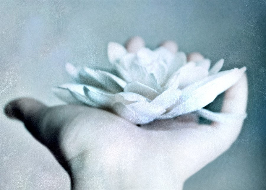 Offering- 5x7 Original Fine Art Photograph - Dreamy - Hand - Flower- White - Pastel - Soft - Dream - urbanantique