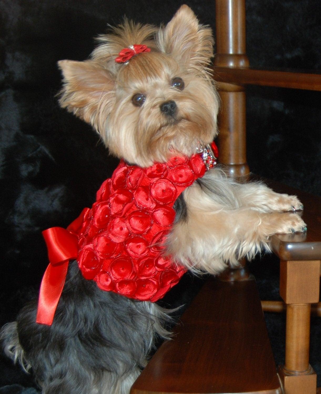 Красный шелк и атласные розетки собак Harness