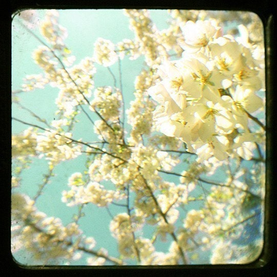 White Cherry Blossom Viewfinder Photo Print, robins egg blue, vintage style home decor  - Wrapped in Romance 8 x 8